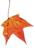 Folha do outono com chuva Fotografia de Stock Royalty Free