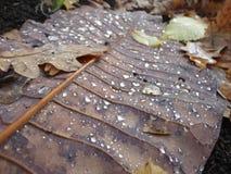 Folha do outono com gotas da terra da floresta da floresta da água Fotos de Stock Royalty Free