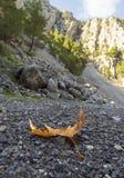 A folha do outono da árvore plana encontra-se nas pedras no desfiladeiro em um dia ensolarado em uma ilha em Grécia foto de stock