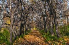 Folha do outono da aleia das árvores Fotos de Stock