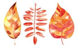 Folha do outono da aquarela ilustração stock