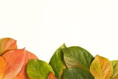 folha do outono da Coração-forma Imagem de Stock Royalty Free