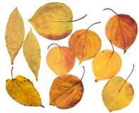 Folha do outono em um fundo branco Imagem de Stock Royalty Free
