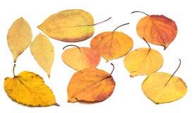 Folha do outono em um fundo branco Fotografia de Stock