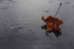 Folha do outono em um fundo escuro molhado fotos de stock royalty free