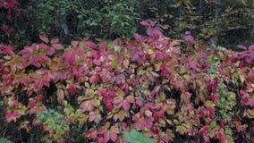 Folha do outono em uma cerca filme