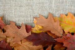 Folha do outono em uma tela natural A folha alaranjada caída carvalho sackcloth Fundo Fotografia de Stock
