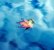 Folha do outono na água Fotos de Stock Royalty Free