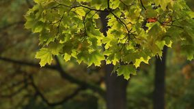 Folha do outono na árvore filme