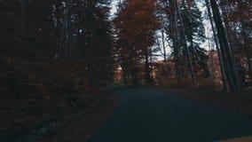 Folha do outono na floresta com estrada vídeos de arquivo