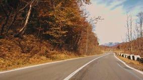 Folha do outono na floresta com estrada video estoque