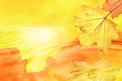 Folha do outono na luz traseira imagem de stock