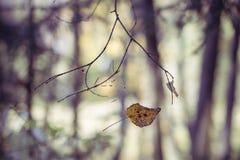 Folha do outono no ramo Imagem de Stock Royalty Free