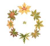Folha do outono põr ao redor fotos de stock
