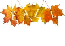 Folha do outono para a venda Fotografia de Stock Royalty Free