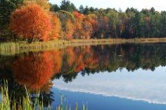 Folha do outono refletida Fotos de Stock Royalty Free