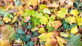 A folha do outono sae do fundo da laranja da textura da natureza Fotos de Stock