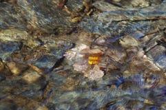 Folha do outono sob a água Imagens de Stock