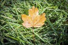 Folha do outono sobre a grama na floresta fotografia de stock royalty free