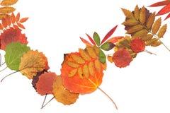 Folha do outono strewn no montão fotografia de stock royalty free