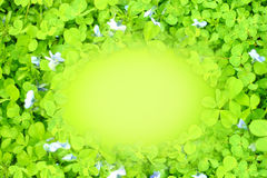 Folha do trevo verde direito no fundo borrado Fotografia de Stock Royalty Free