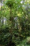 Folha do verão, Eagle Creek, desfiladeiro de Colômbia, Oregon imagem de stock royalty free