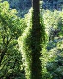 Folha do verão, Eagle Creek, desfiladeiro de Colômbia, Oregon fotografia de stock royalty free
