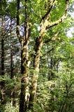 Folha do verão, Eagle Creek, desfiladeiro de Colômbia, Oregon imagem de stock