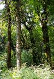 Folha do verão, Eagle Creek, desfiladeiro de Colômbia, Oregon fotos de stock royalty free