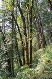 Folha do verão, Eagle Creek, desfiladeiro de Colômbia, Oregon imagens de stock
