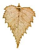 Folha do vidoeiro no ouro Imagens de Stock Royalty Free