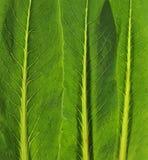 Folha dos vegetais Foto de Stock Royalty Free