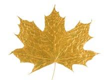 Folha dourada da árvore de bordo Imagem de Stock Royalty Free