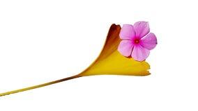 Folha dourada e flor roxa Fotografia de Stock Royalty Free