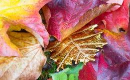 Folha dourada original entre as folhas de outono Imagens de Stock Royalty Free