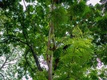Folha e árvore, luz do sol e natureza bonita fotografia de stock royalty free