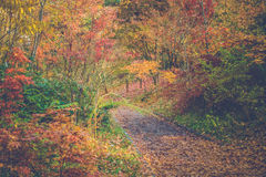 Folha e árvores coloridas bonitas do outono Fotos de Stock Royalty Free