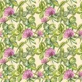 A folha e as flores do trevo entregam a ilustração sem emenda tirada da aquarela do teste padrão Dia feliz dos patricks de Saint Imagem de Stock