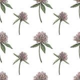 A folha e as flores do trevo entregam a ilustração sem emenda tirada do gráfico do teste padrão Dia feliz dos patricks de Saint Imagens de Stock Royalty Free