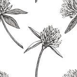 A folha e as flores do trevo entregam a ilustração sem emenda tirada do gráfico do teste padrão Dia feliz dos patricks de Saint Fotografia de Stock Royalty Free