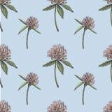 A folha e as flores do trevo entregam a ilustração sem emenda tirada do gráfico do teste padrão Dia feliz dos patricks de Saint Imagens de Stock