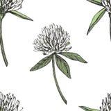 A folha e as flores do trevo entregam a ilustração sem emenda tirada do gráfico do teste padrão Dia feliz dos patricks de Saint Fotos de Stock Royalty Free