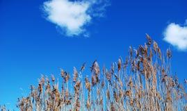 Folha e céu azul imagens de stock royalty free