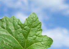 Folha e céu verdes Fotografia de Stock Royalty Free