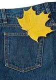 Folha e calças de brim Imagem de Stock