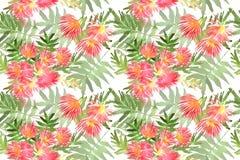 Folha e flores do julibrissin do Albizia da mimosa do teste padrão Imagens de Stock Royalty Free