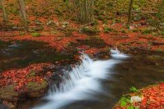 A folha e a montanha bonitas do outono fluem na floresta Imagem de Stock Royalty Free