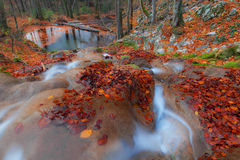 A folha e a montanha bonitas do outono fluem na floresta Imagem de Stock
