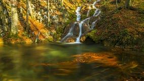 A folha e a montanha bonitas do outono fluem na floresta Fotografia de Stock