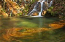 A folha e a montanha bonitas do outono fluem na floresta Fotografia de Stock Royalty Free